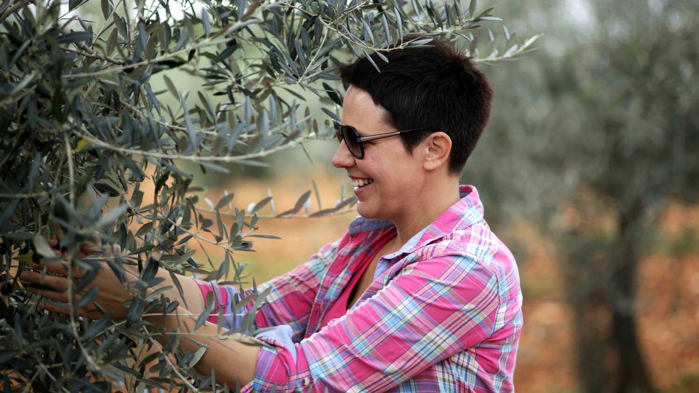 olivenernte vodnjan